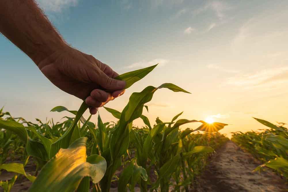 COVID-19 economic relief webinar for farmers