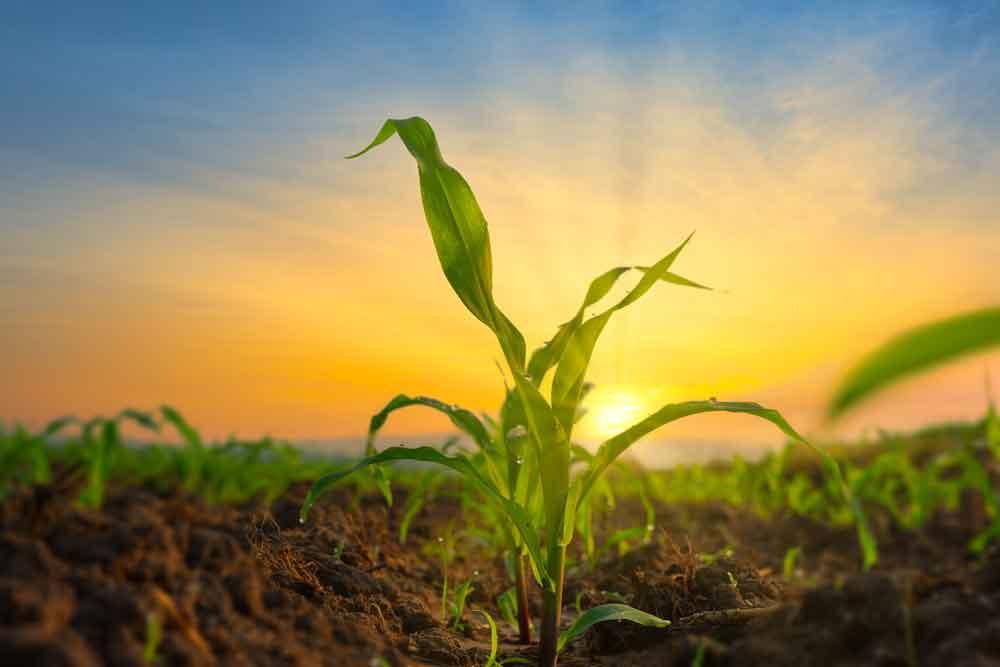 COVID-19 on-farm planning