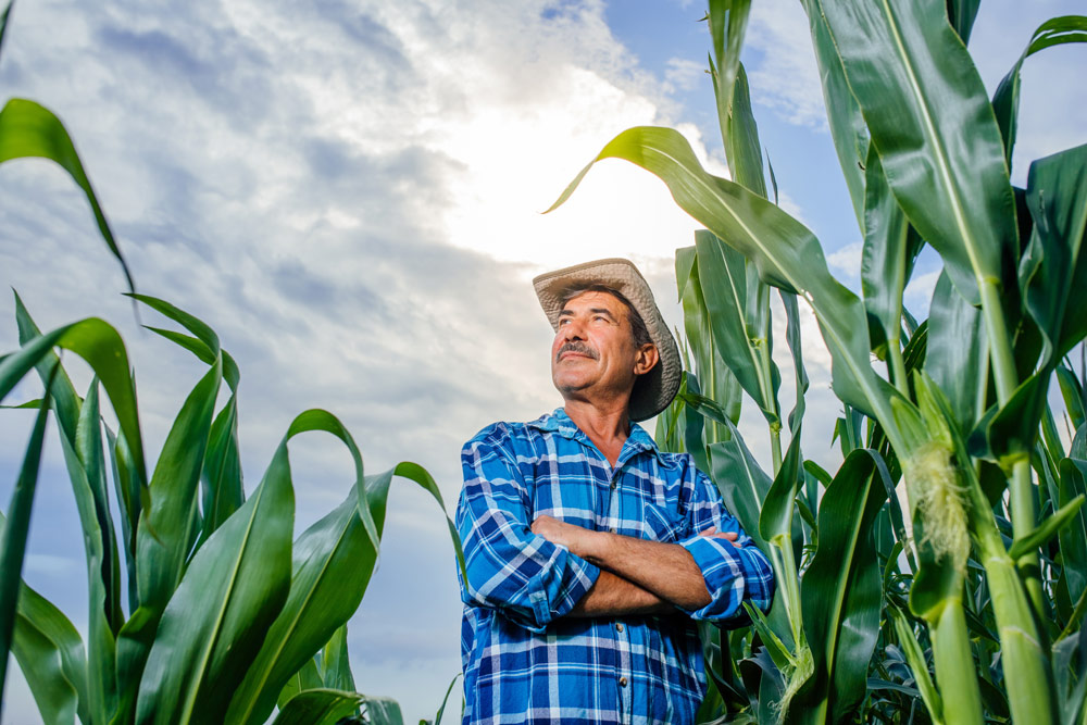 2020 National Corn Yield Contest Winners Announced